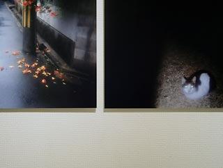 20110809-2.jpg